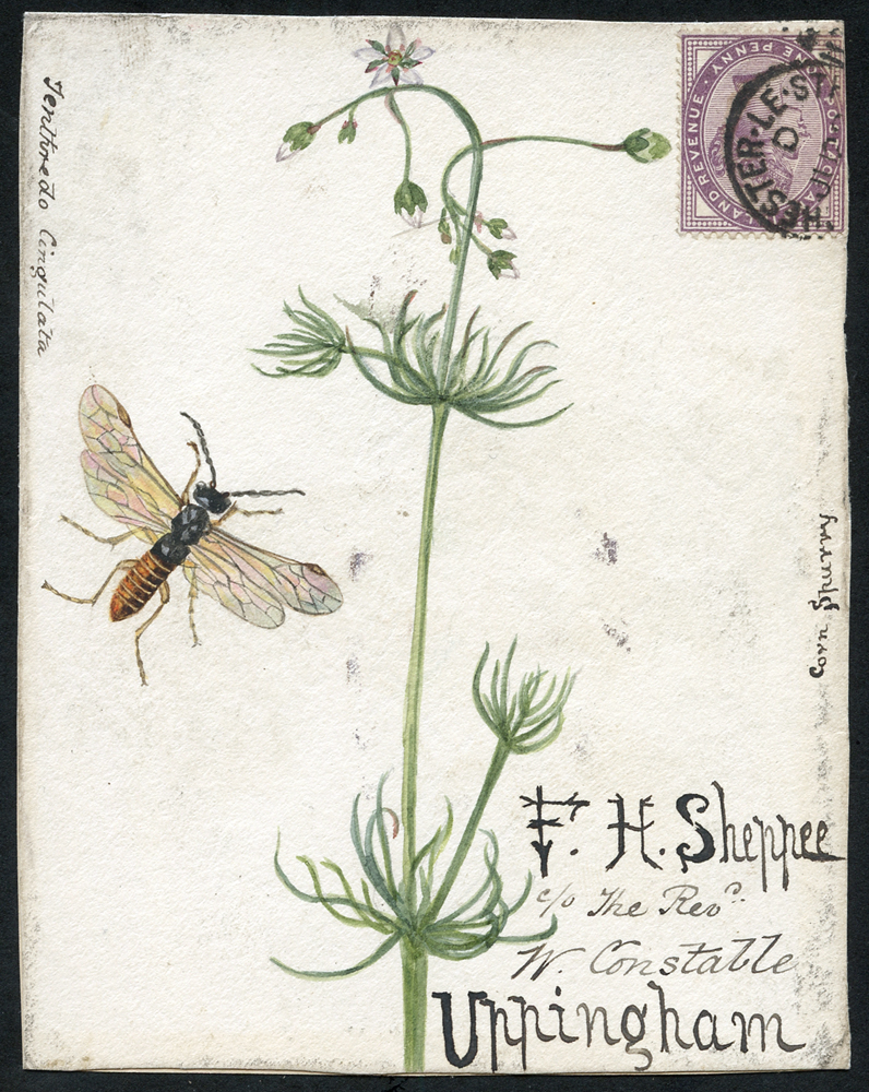 1890 hand painted watercolour (Corn Spurry & Tenthredo Cingilata) cover front, 1d lilac, Chester Le Street duplex to Uppingham
