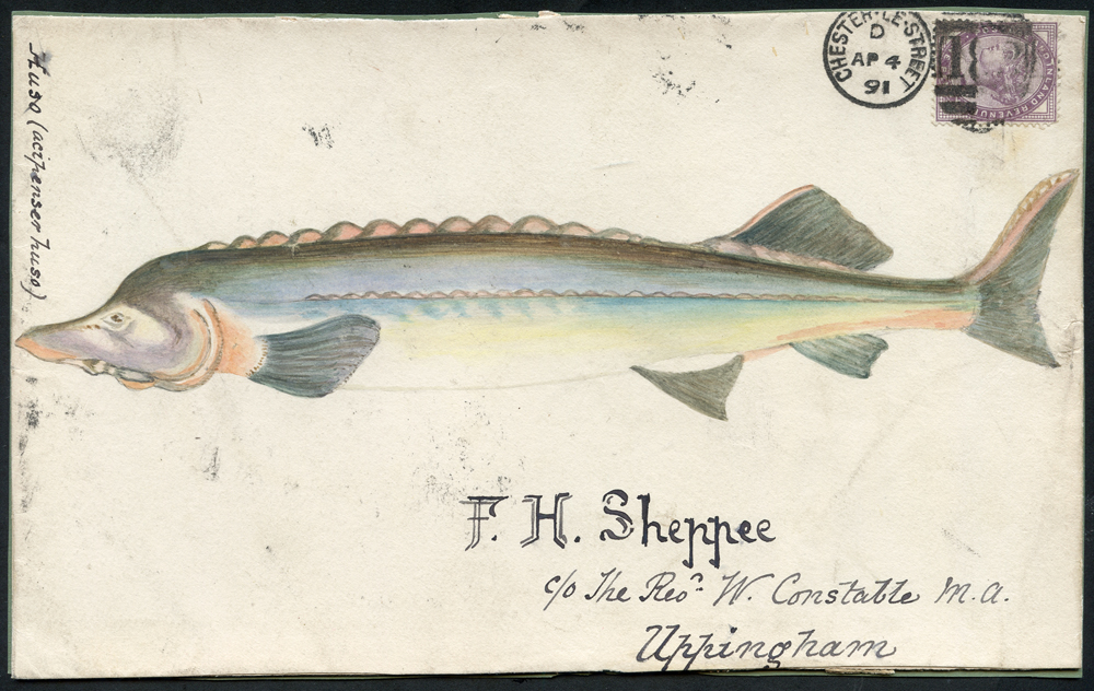1891 hand painted watercolour (Huso fish) cover front, 1d lilac, Chester Le Street duplex to Uppingham