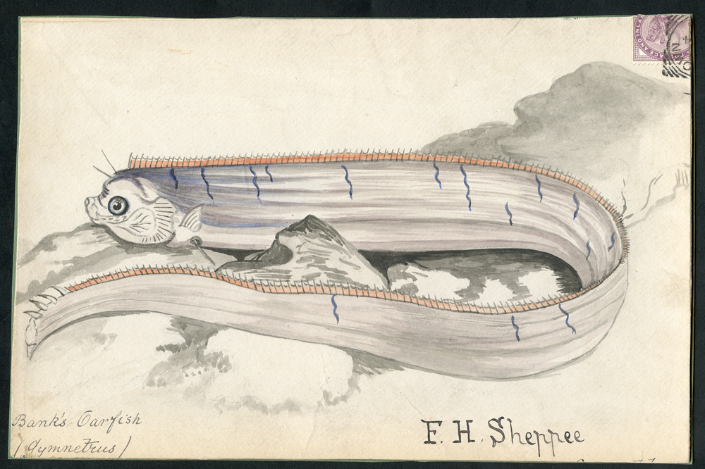 c1891 hand painted watercolour (Banks Oarfish) cover front, 1d lilac, tied squared circle to Uppingham