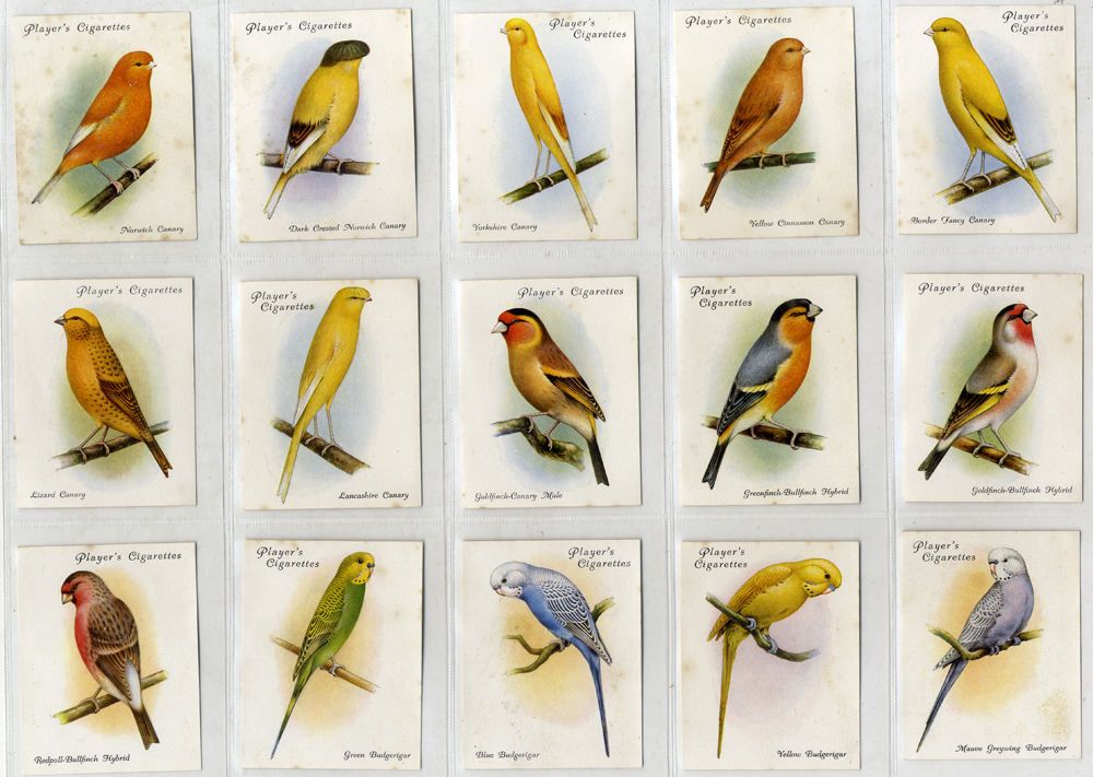John Player 1935 Aviary and Cage Birds, complete set of 25 (large cards) Cat. £93