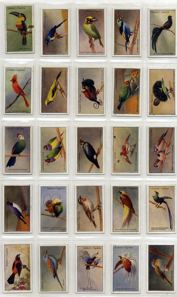 Gallaher 1928 200 Tropical Birds, 1st series, complete set of 50, Cat. £70