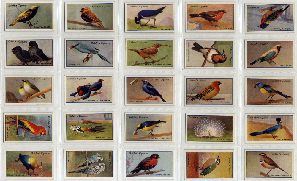 Gallaher 1929 200 Tropical Birds, 2nd series, complete set of 50, Cat. £70