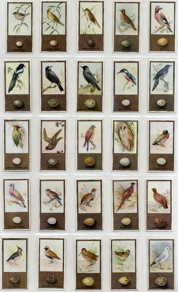 Godfrey Phillips 1936 British Birds and their Eggs, complete set of 50, Cat. £55