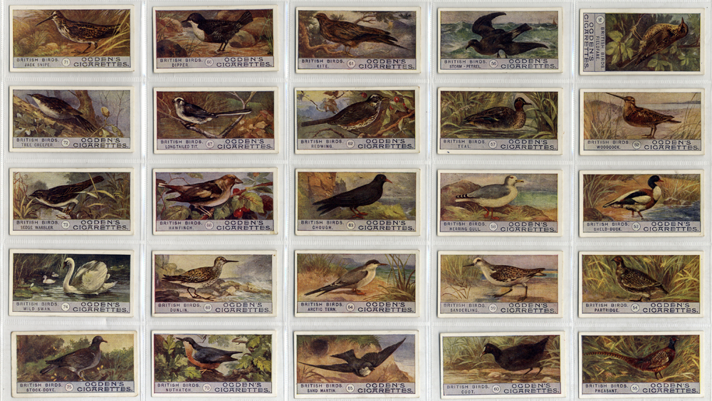Ogdens 1909 British Birds, 2nd series, complete set of 50, Cat. £100