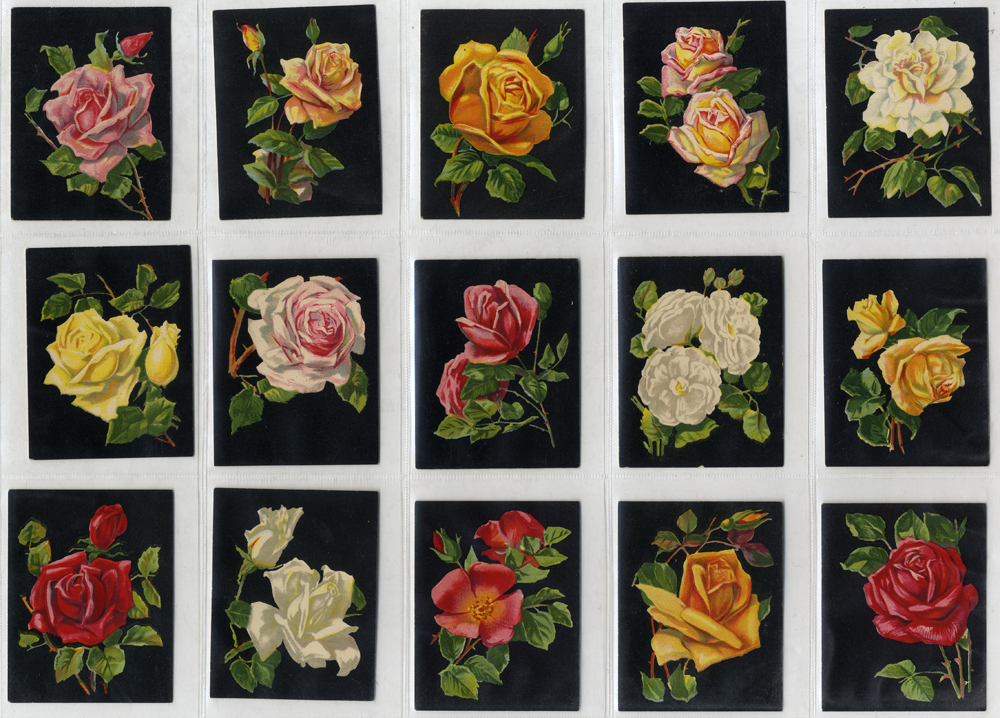 Millhoff 1927 Roses, complete set of 25 (large), Cat. £65