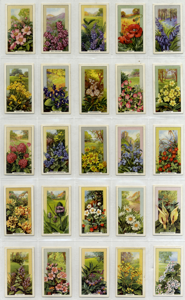 Gallaher 1939 Wild Flowers, complete set of 48, Cat. £30