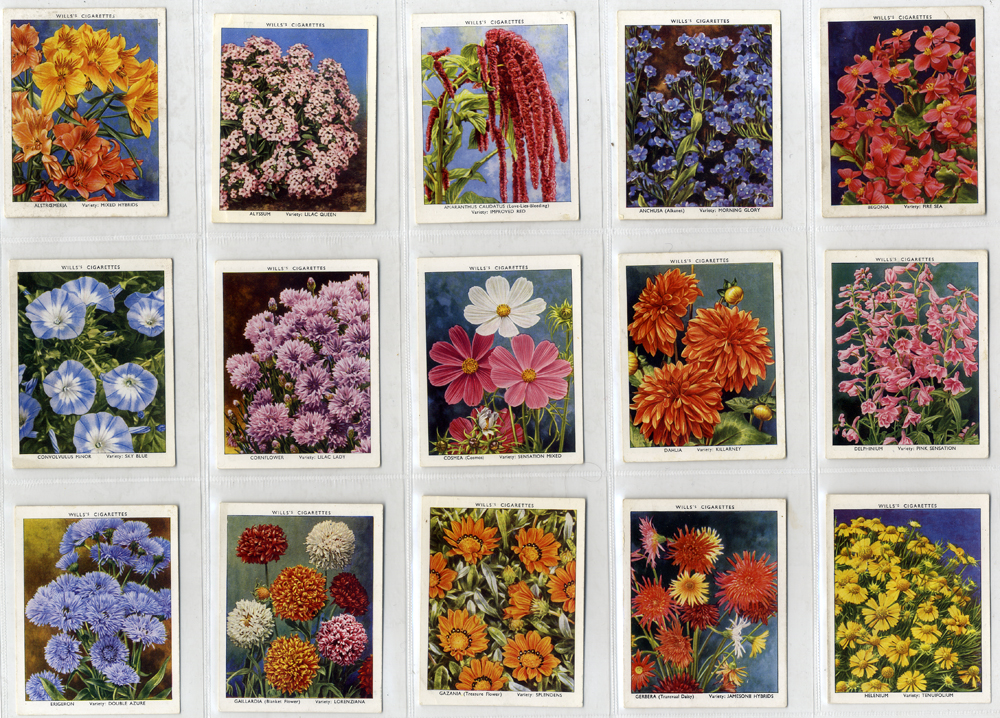 Wills 1939 Garden Flowers New Varieties, 2nd series, complete set of 40, Cat. £24