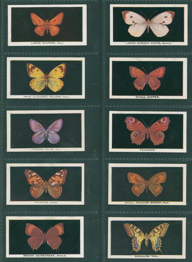 1927 Godfrey Phillips British Butterflies